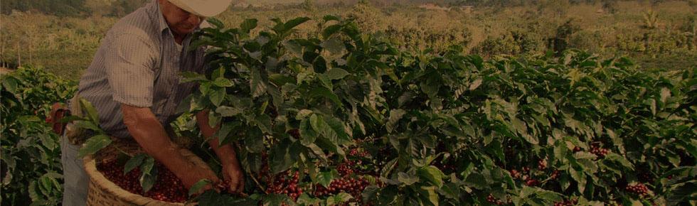 Cesta kávy: 3. díl - Espresso